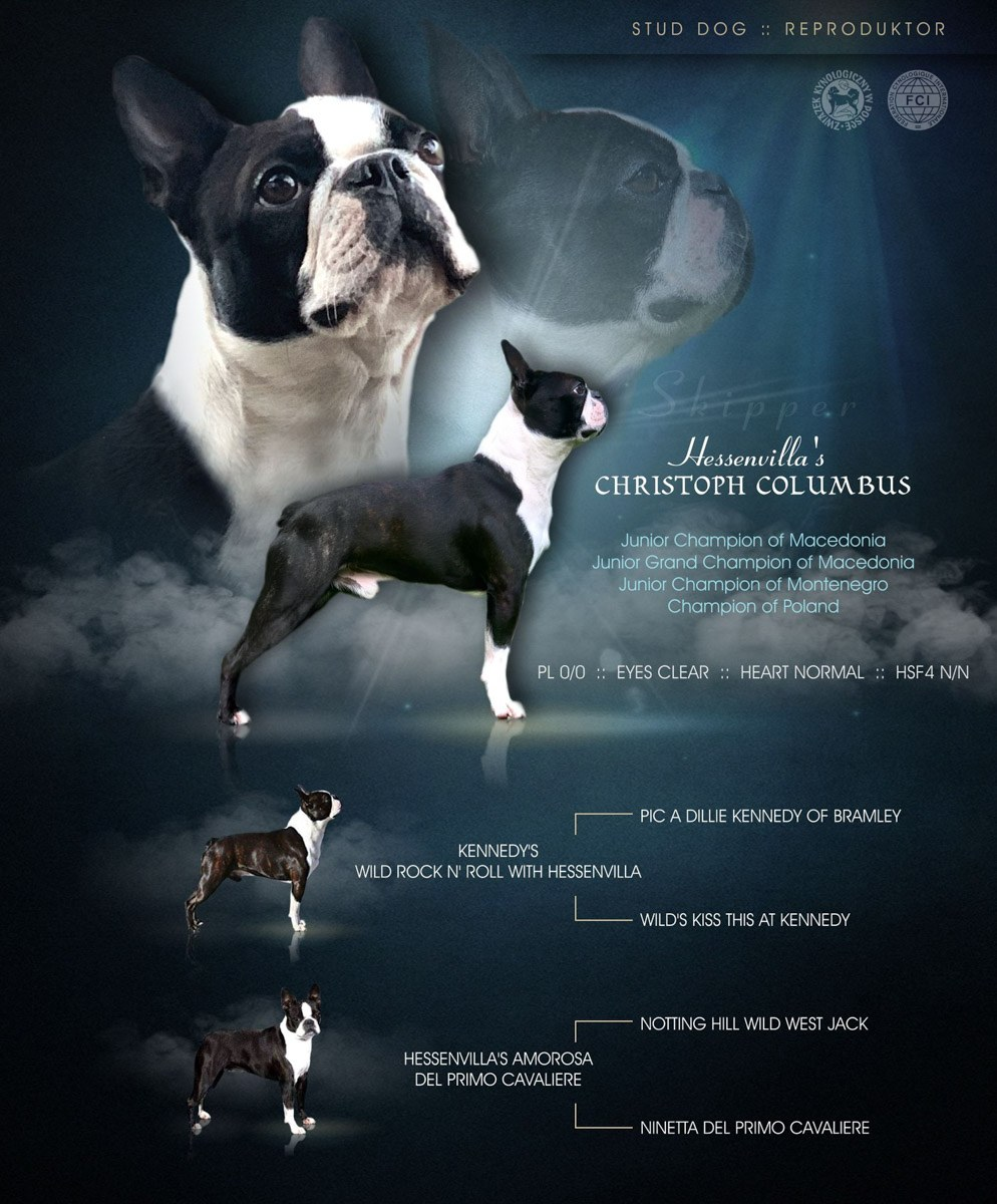 Boston Terrier Hessenvilla
