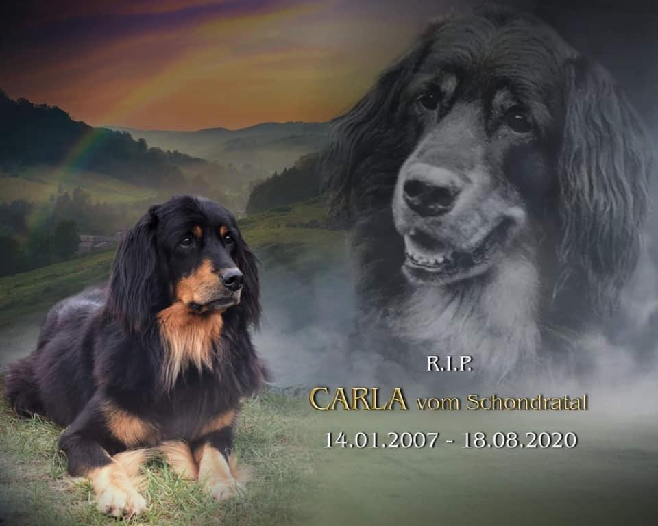 Carla pożegnanie